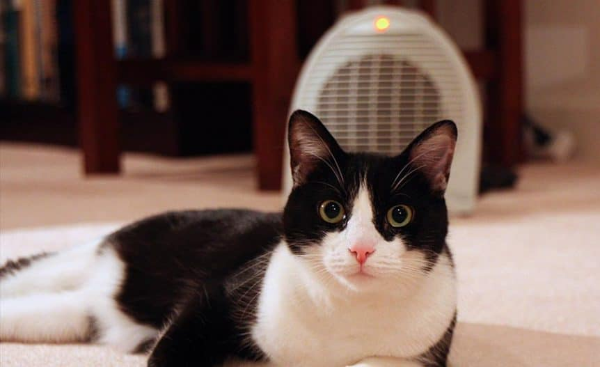 are space heaters safe for cats